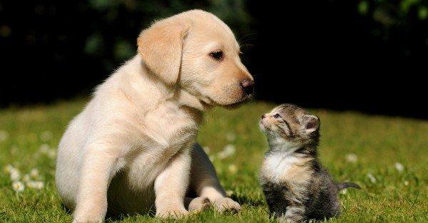 Cute-Puppy-Kitten-600x312